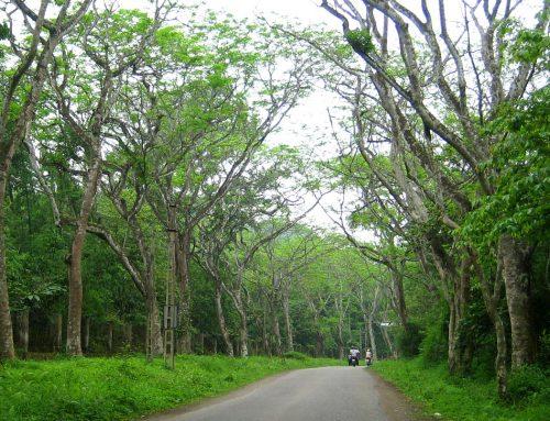 Giải thích các yếu tố của định nghĩa gỗ hợp pháp