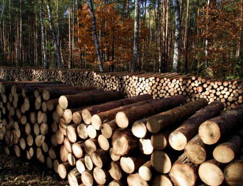 Xác minh gỗ tại tất cả các giai đoạn của chuỗi cung ứng trong VNTLAS